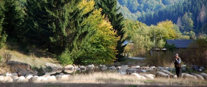transylvania-sheppard