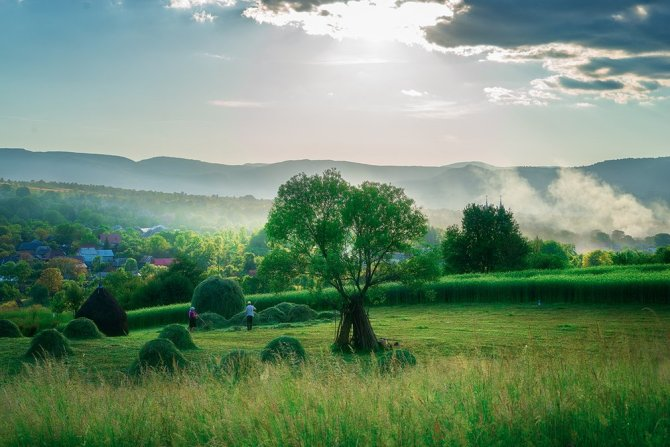 meadow_romania
